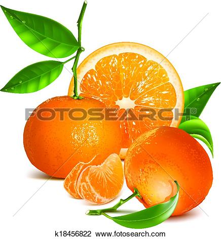 Clipart of Fresh tangerines with green leaves and orange.
