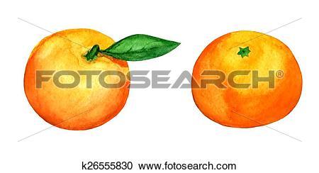 Clipart of set of 2 vector tangerines k26555830.