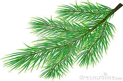 Weihnachtsgrner Tannenzweig Stock Illustrationen, Vektors.