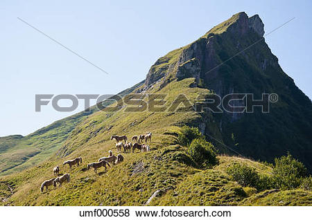 Pictures of Austria, Horses standing on meadow in Tannheim Alps.