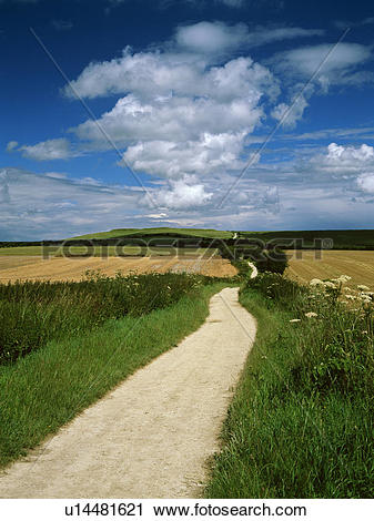 Stock Photography of England, Oxfordshire, The Ridgeway. The.
