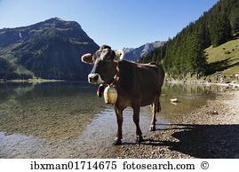 Cowbells Images and Stock Photos. 602 cowbells photography and.