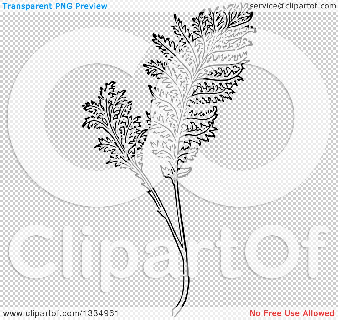 Clipart of a Black and White Woodcut Herbal Tansy Plant.