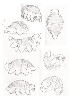 42 Best tardigrade images.