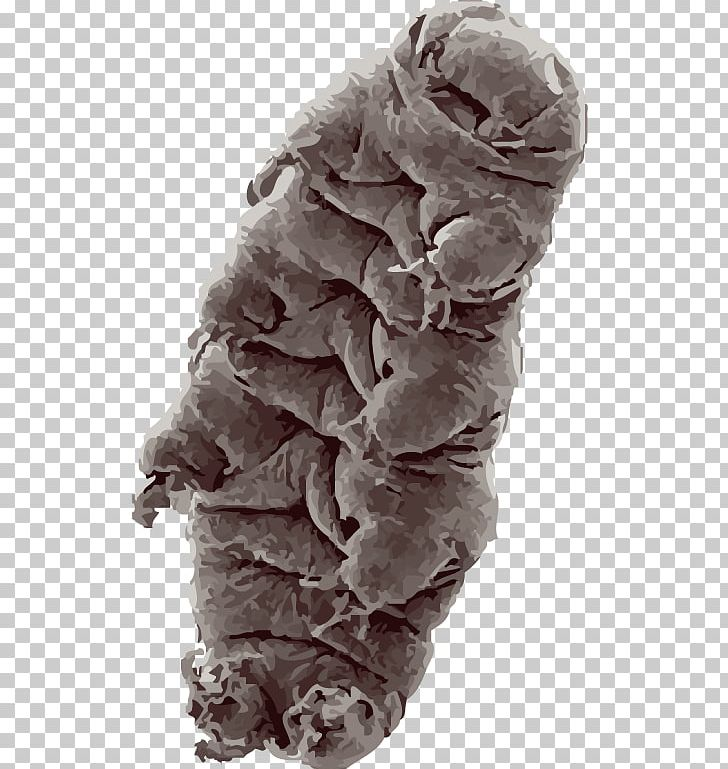 Tardigrade Bear Water Animal Piezophile PNG, Clipart.