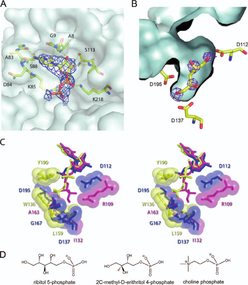 Ligand binding site of TarI. (A) The nucleotide pocket with.