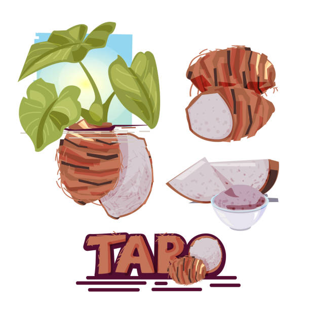 Taro clipart 3 » Clipart Station.