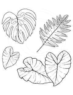 Tropical Leaves in 2019.
