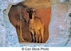 Stock Photographs of Giraffe at Taronga Zoo..