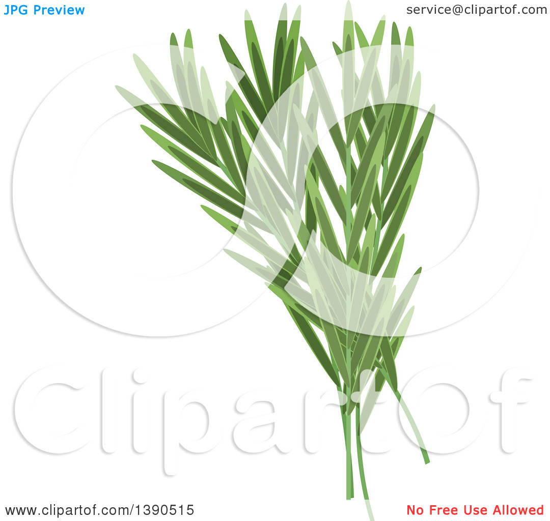 Clipart of a Culinary Spice Herb, Tarragon.