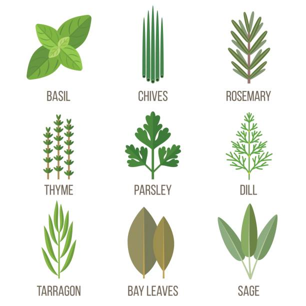 Tarragon Clip Art, Vector Images & Illustrations.