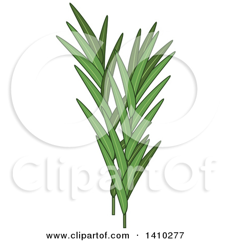 Clipart of a Culinary Spice Herb, Ginger Root.