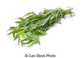 Tarragon Images and Stock Photos. 1,248 Tarragon photography and.