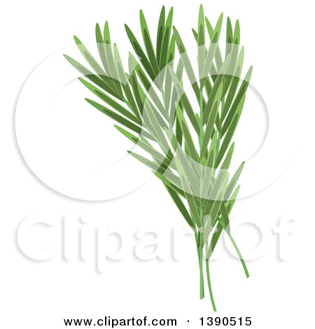 Clipart of a Culinary Spice Herb, Rosemary.