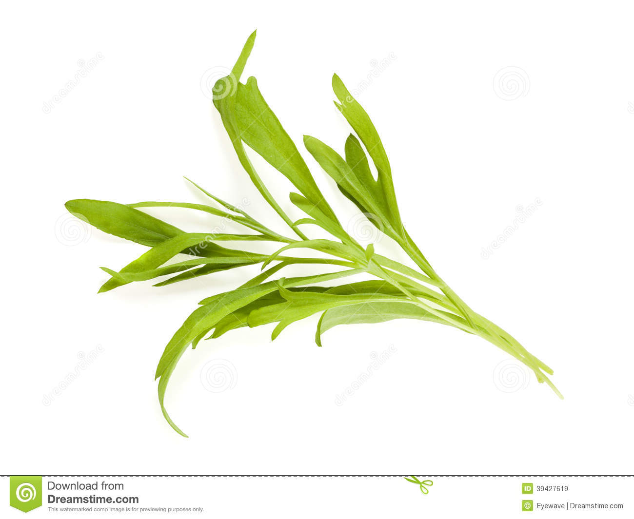 Leaves Tarragon Stock Photos, Images, & Pictures.