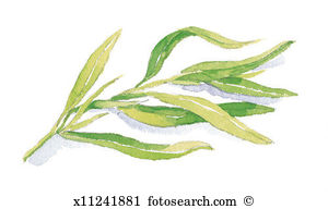Tarragon Illustrations and Clip Art. 8 tarragon royalty free.