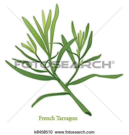 Clipart of French Tarragon Herb k8458510.