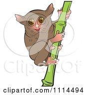 Tarsier clipart - Clipground