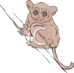 Art Image: A Wide Eyed Tarsier Clinging To a Branch.