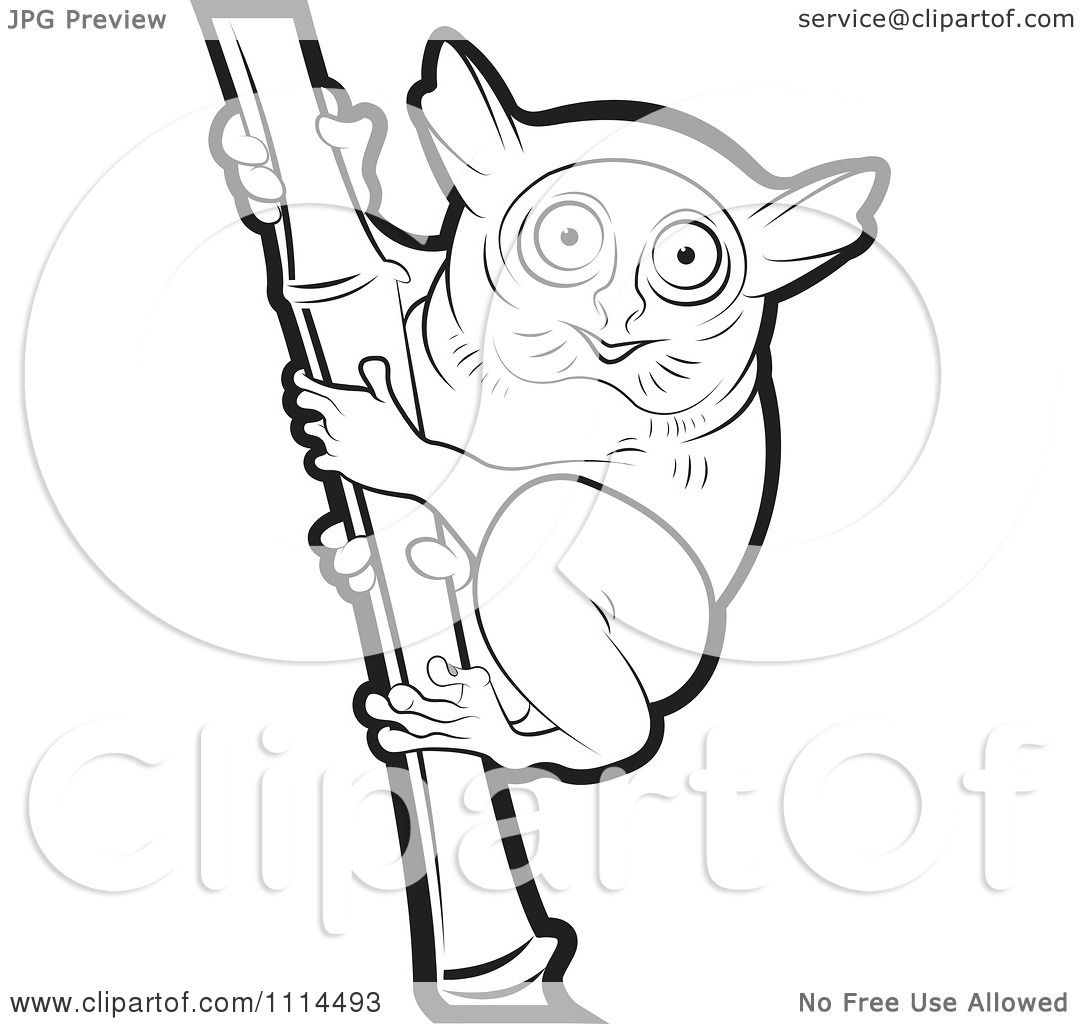 Clipart Outlined Tarsier On Bamboo 1.