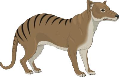 Tasmanian tiger clipart.