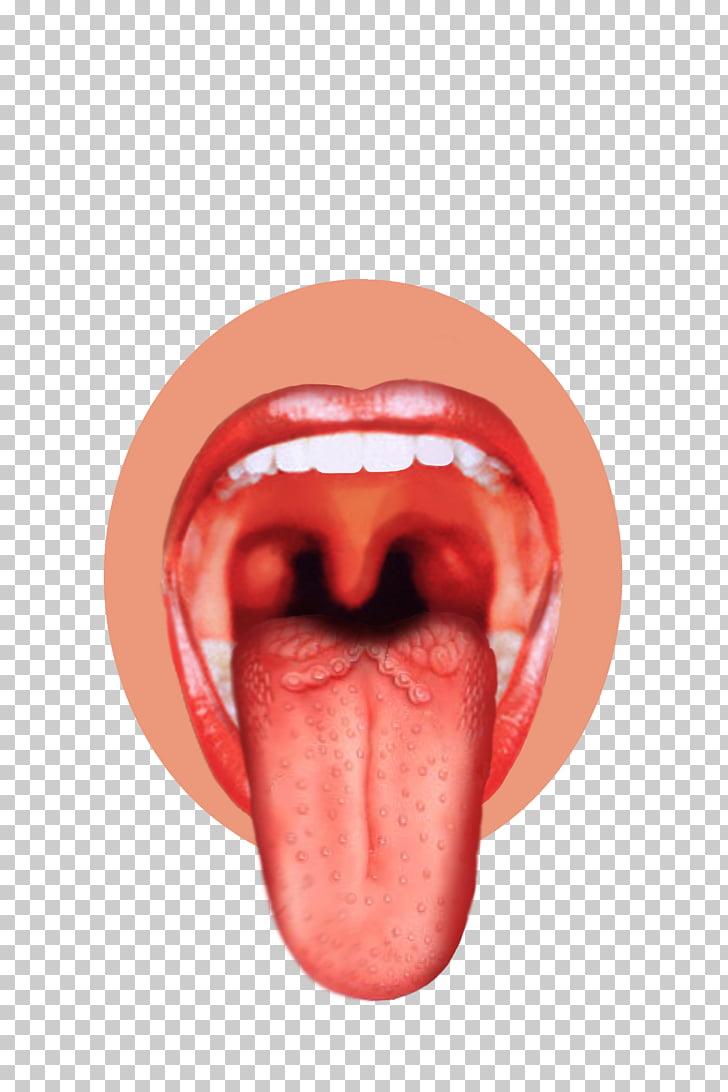 Tongue Sense Sensory nervous system Taste bud Human mouth.
