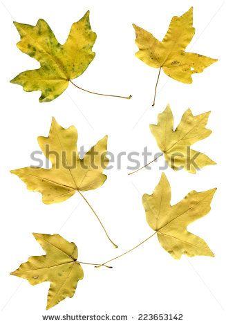 autumn leaves http://www.shutterstock.com/g/Og+Tatiana?rid=2220188.