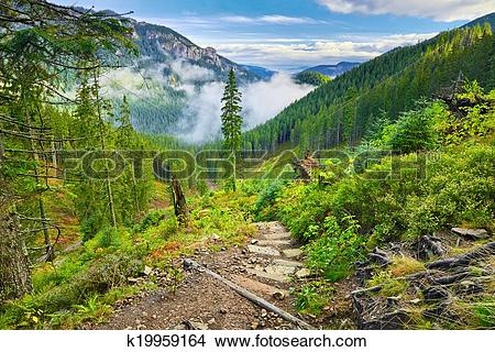 Stock Photo of Mountain trail at the forest. The Tatra Mountains.