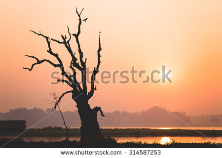 Sunrise Near U Bein Bridge With Birds, Dead Tree And Taungthaman.