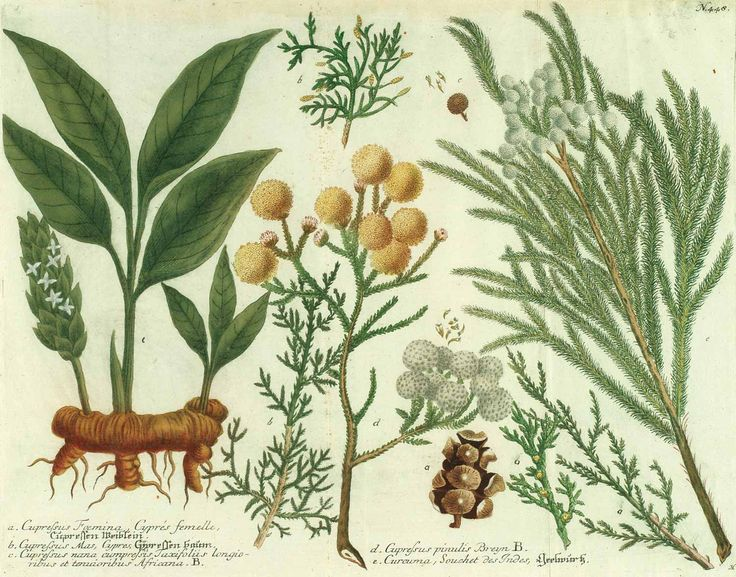 1000+ images about Botany: Trees on Pinterest.