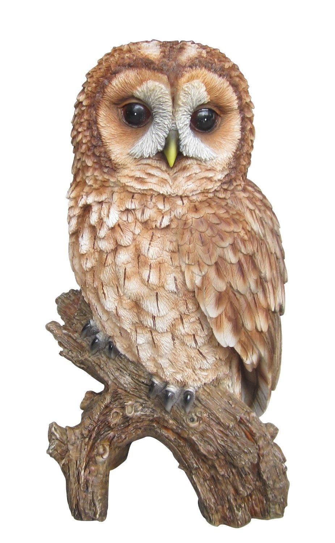 Tawny owl clipart.