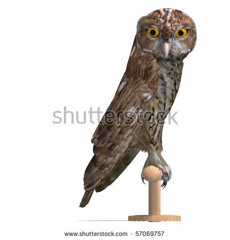Tawny Owl Stock Photos, Royalty.