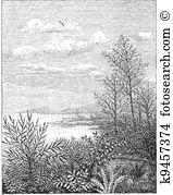 Taxaceae Clip Art Royalty Free. 4 taxaceae clipart vector EPS.