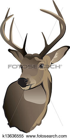 Clipart of Trophy Whitetail Deer Buck k13636555.