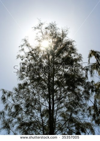 Bald Cypress Tree Stock Photos, Royalty.