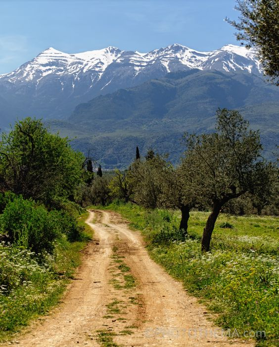 Walk through the endless olive groves with views towards the snow.