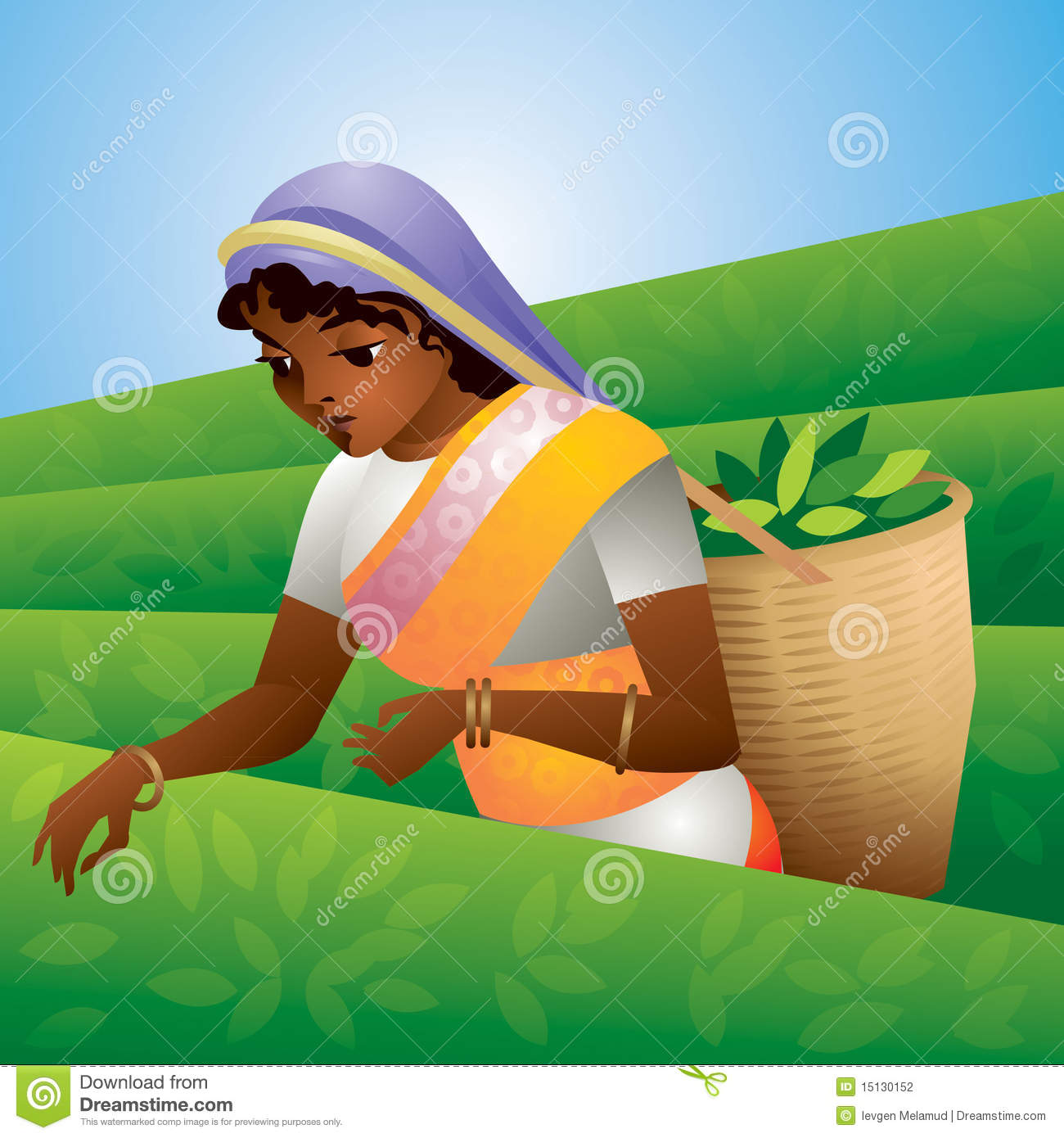 Tea Plantation Stock Illustrations.