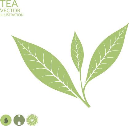 Green Tea Leaf Clip Art, Vector Images & Illustrations.