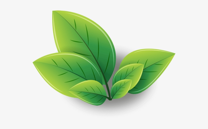 Green Tea Png Image With Transparent Background.
