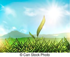 Tea plantation Clipart and Stock Illustrations. 276 Tea plantation.