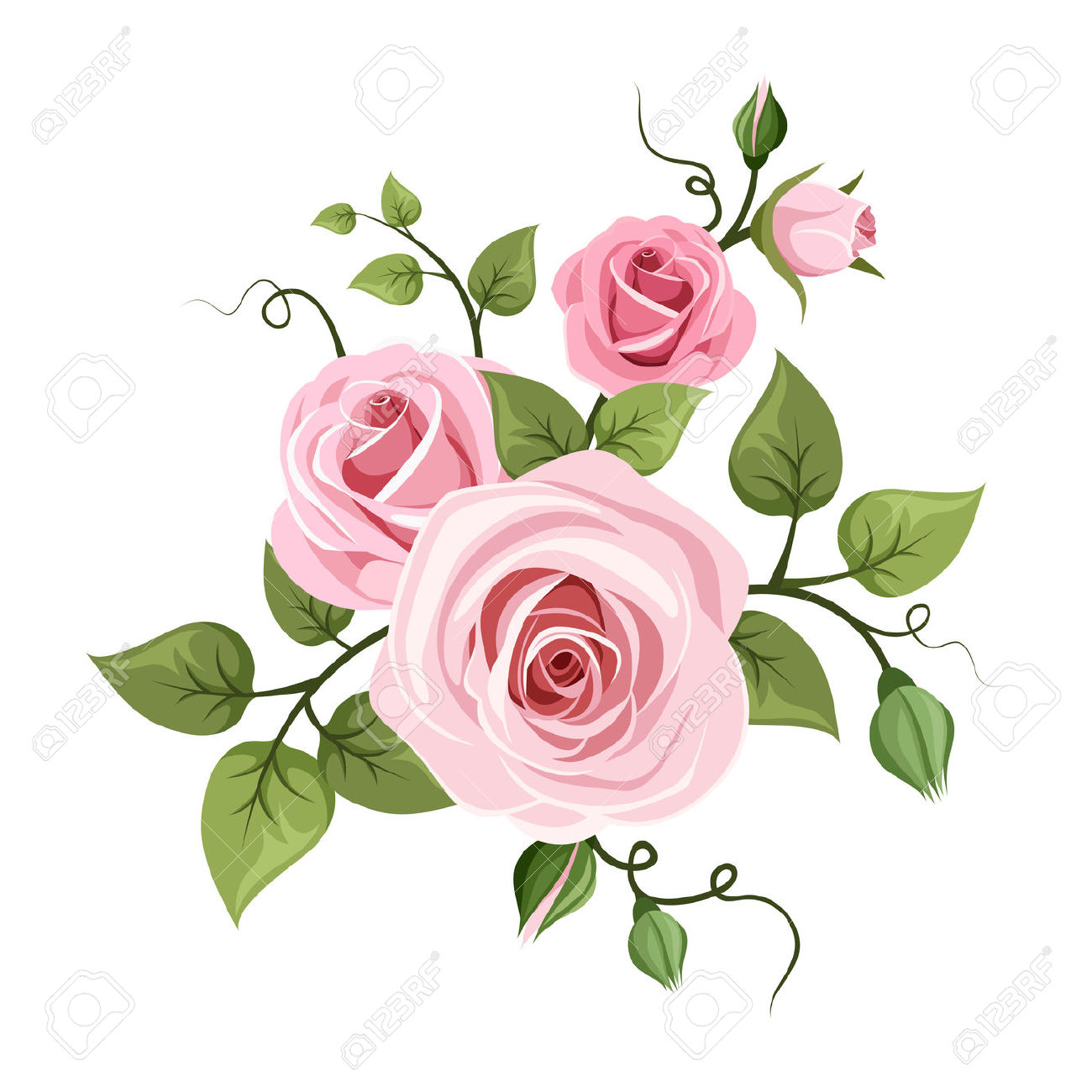 Pink Roses Illustration Royalty Free Cliparts, Vectors, And Stock.