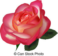 Tea rose Clipart and Stock Illustrations. 749 Tea rose vector EPS.