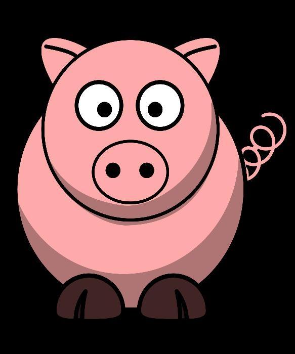 Archive: Teacup Pigs Piglets.