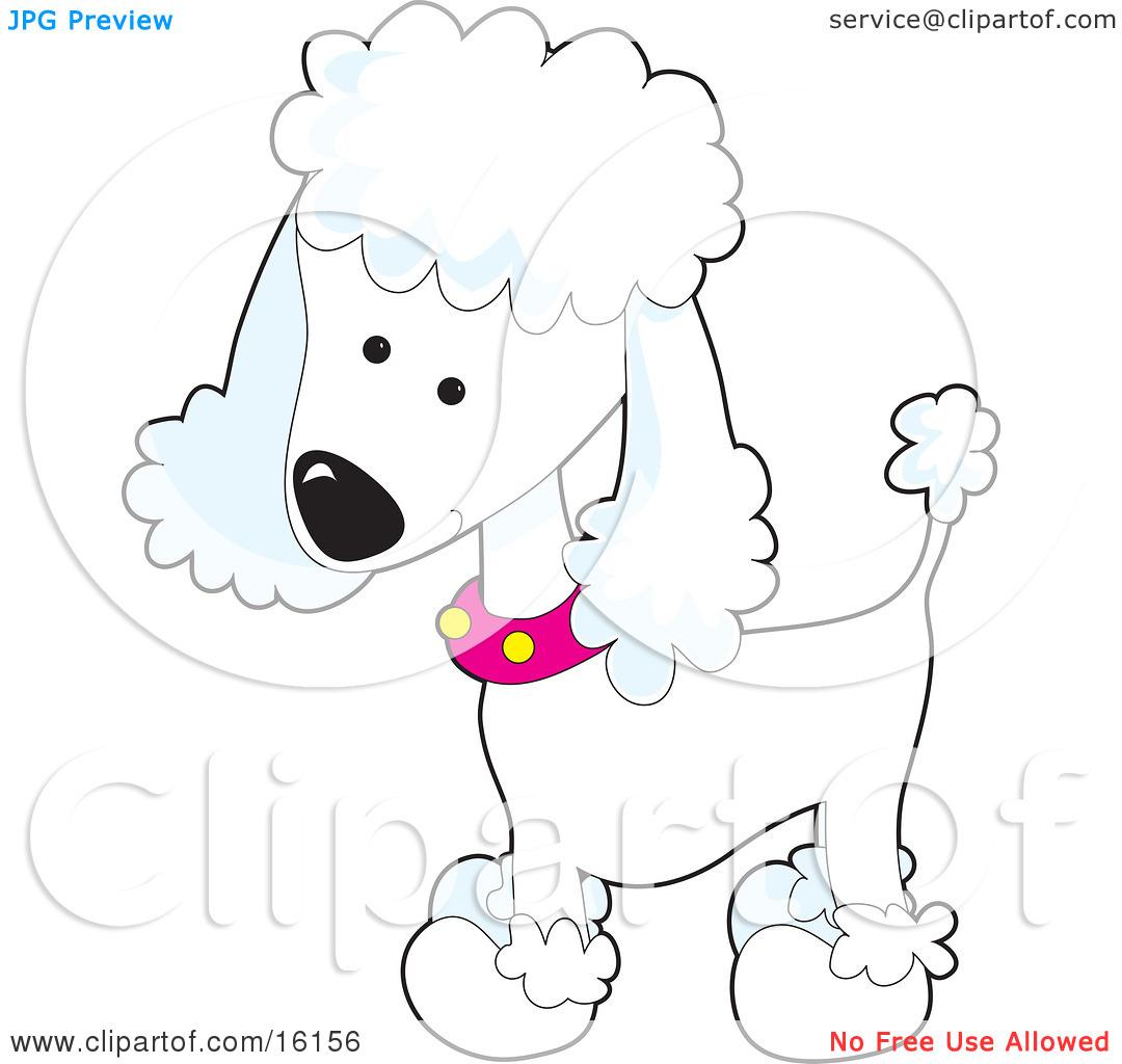 Teacup Poodle Clipart.