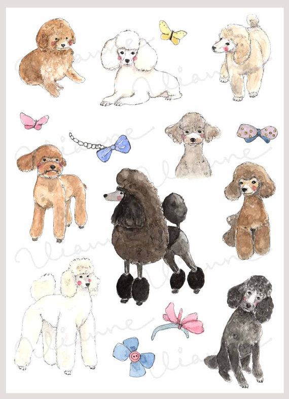 332 Best images about Poodles on Pinterest.