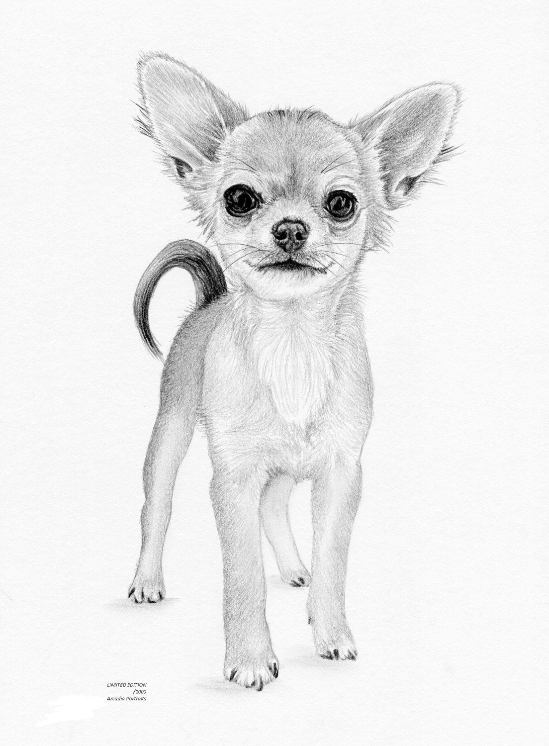 CHIHUAHUA puppy dog Limited Edition art drawing print signed.