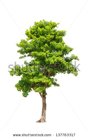 Deciduous Leaves White Background Stock Photos, Royalty.