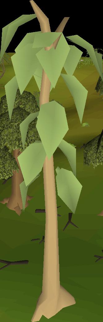 Teak tree.