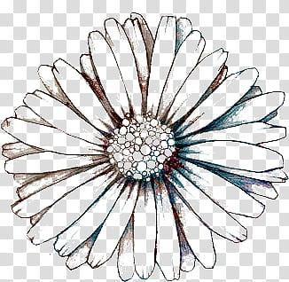 Black and teal flower illustration transparent background.