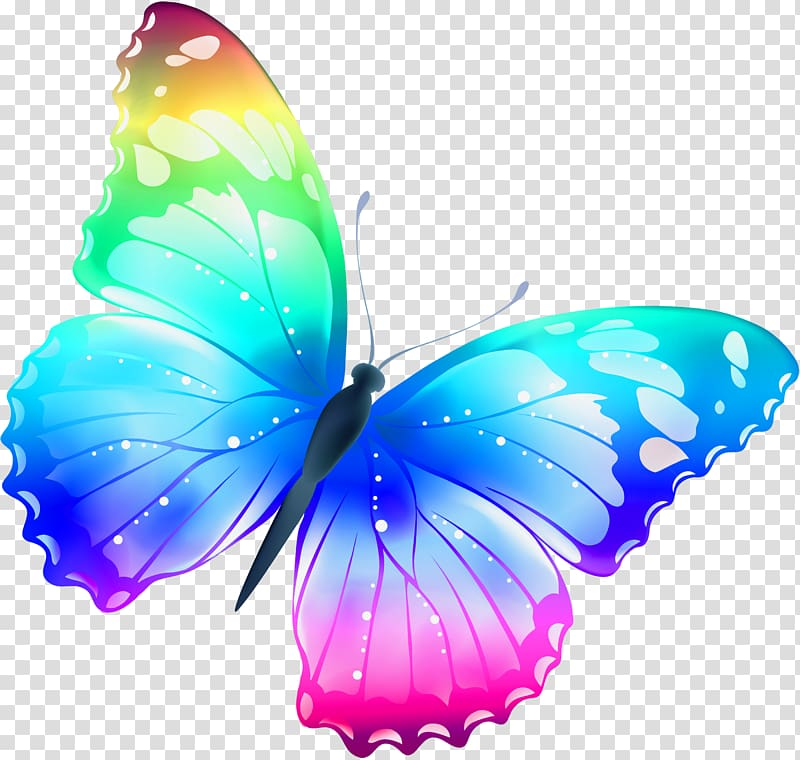 Butterfly , Large Multi Color Butterfly , blue, purple, and.